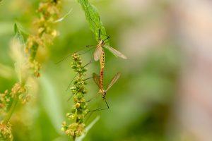 Prirodna sredstva protiv insekata