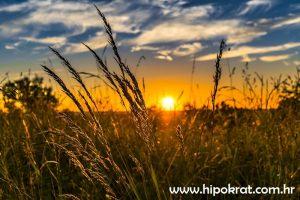 Solarna joga (sungazing)