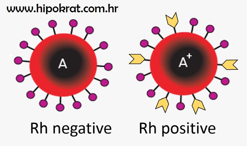Krvna grupa A