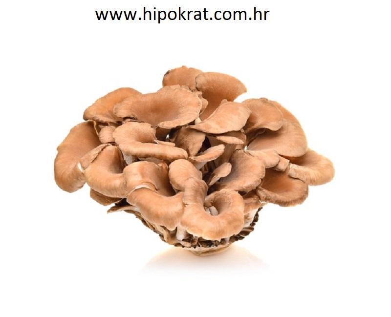 Maitake (Grifola frondosa)